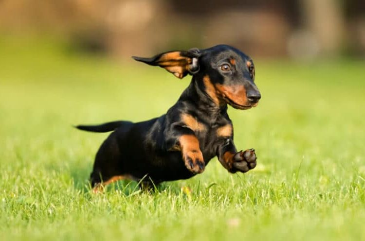 Top tips for keeping your pets safe